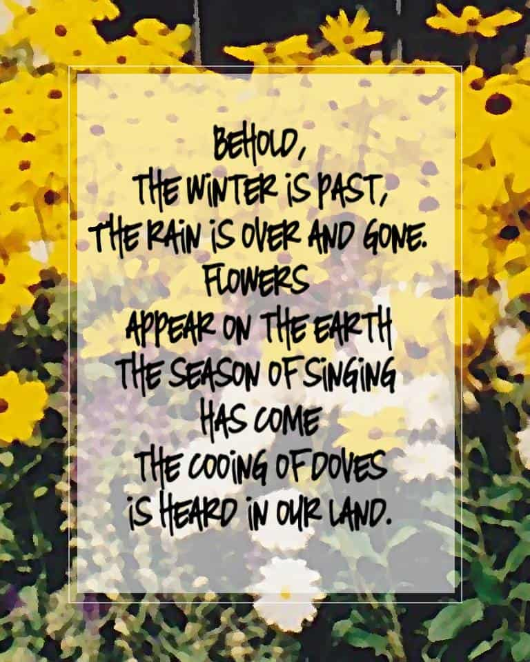 song of songs 2 11 to 14