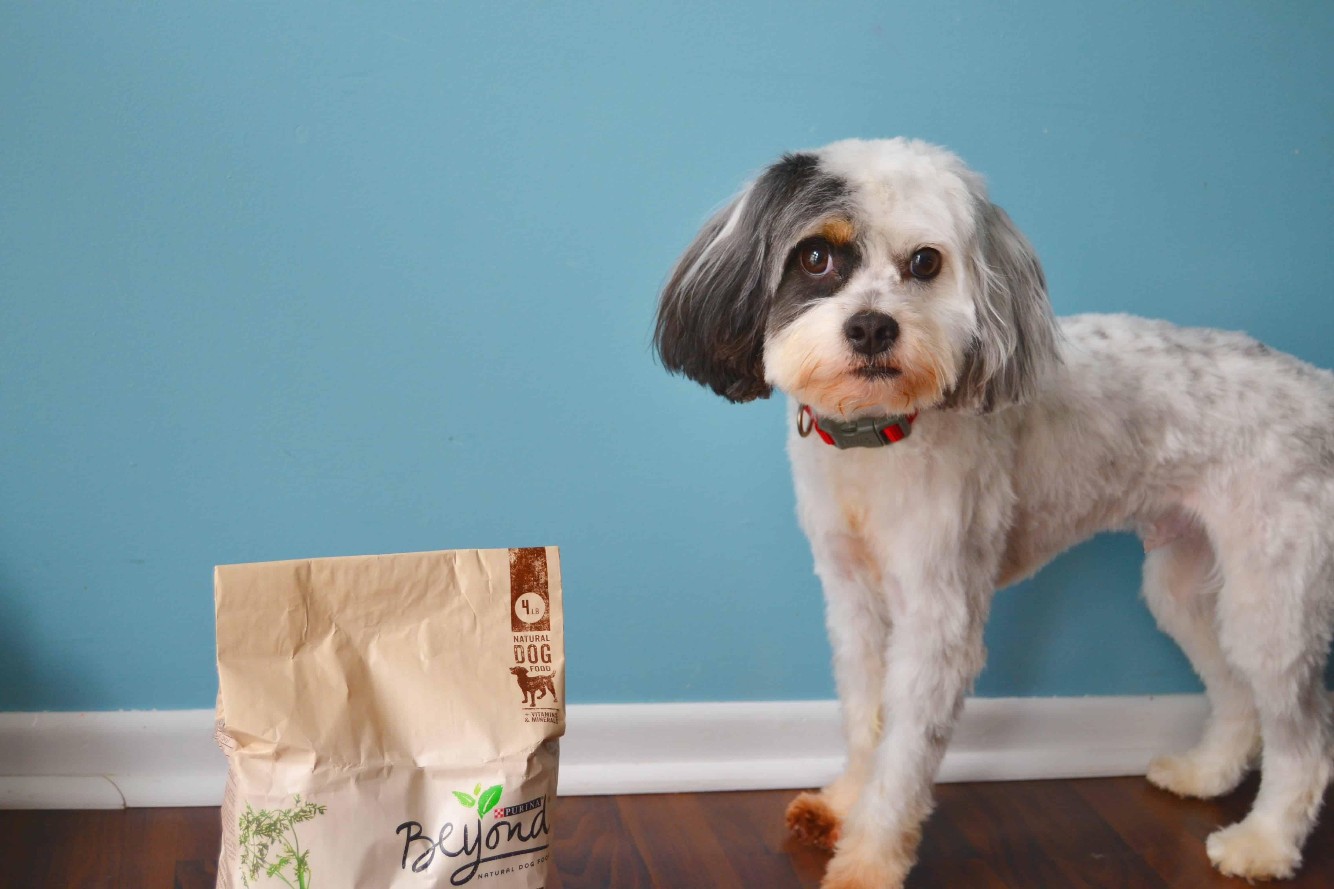 dog with dog food bag