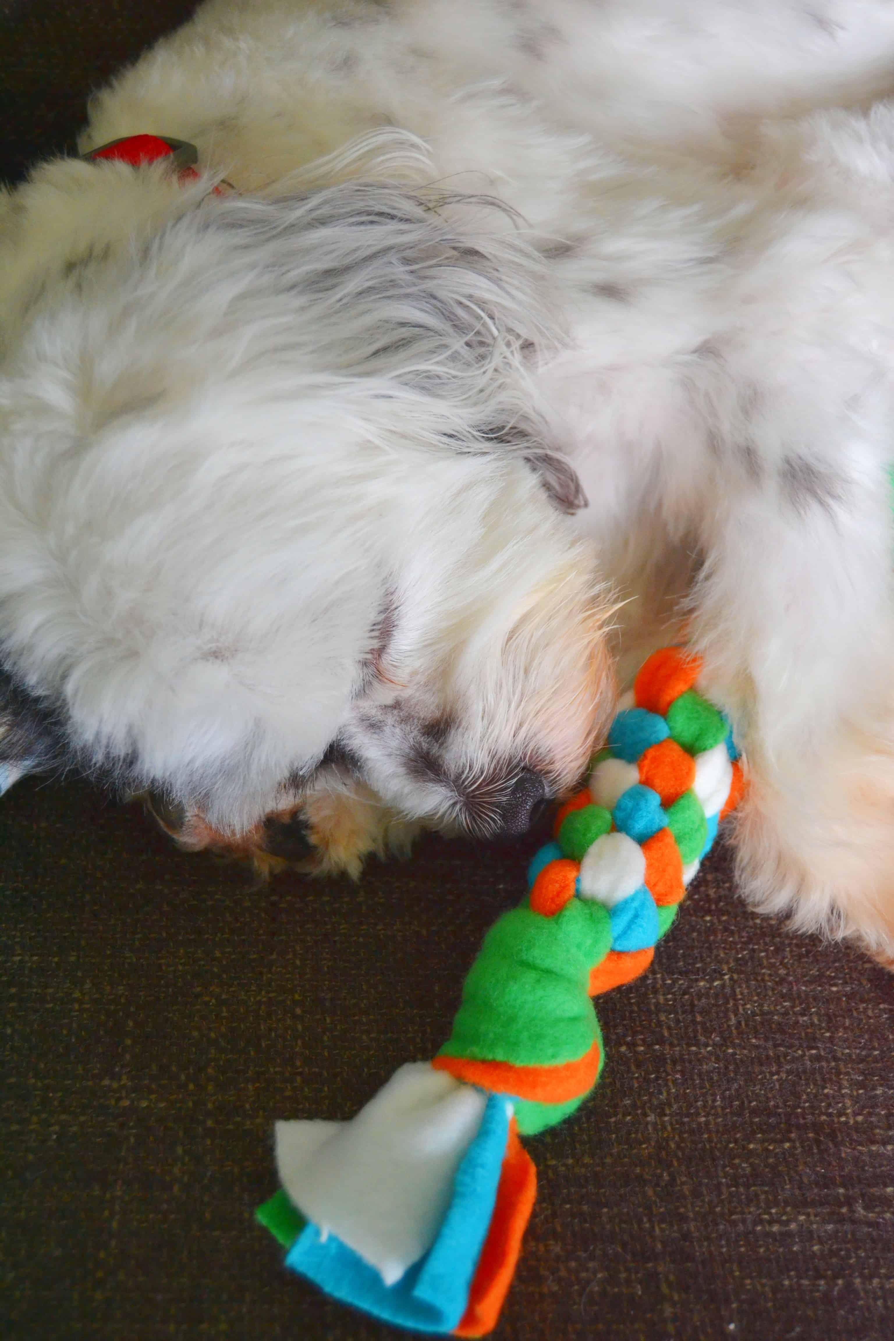 fluffy white dog snuggling the fleece dog toy