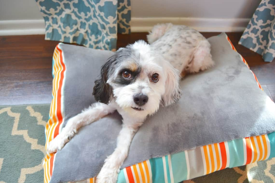 how to sew a dog bed
